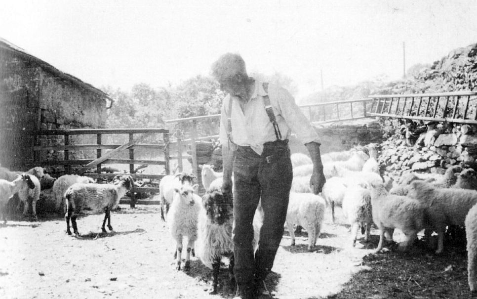 Richard Gardner sorting sheep for clipping at Tarnside Farm 1938