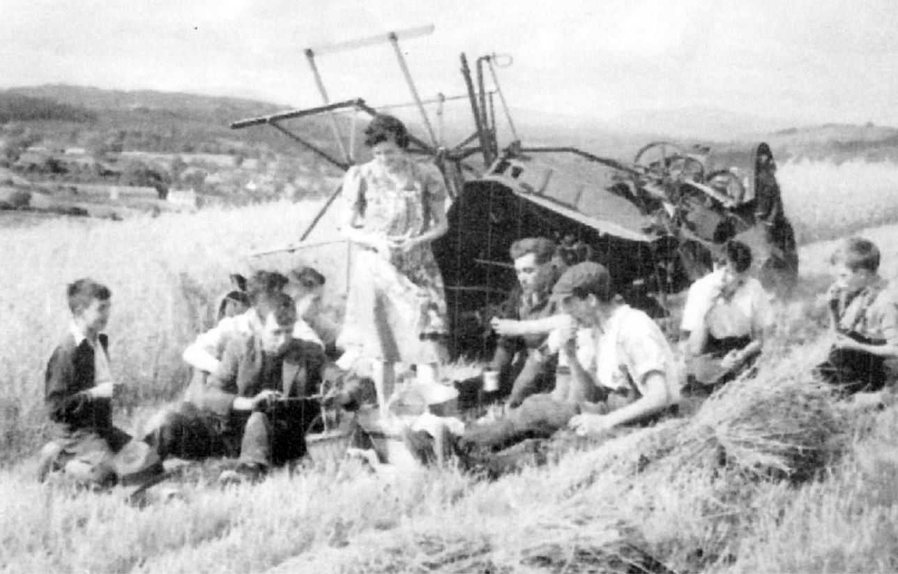 Shepherd family harvesting at Broad Oak