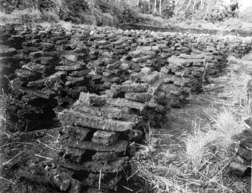 Peat stacked in piles to let the wind blow through it